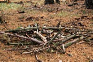 Free Firewood Pile