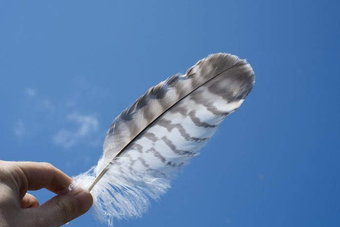 Feather being held up against a clear blue sky